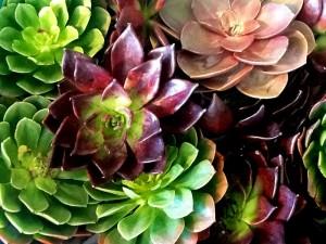 artichoke-like-flowers