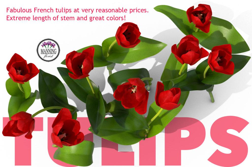 Tulips-promo-0317